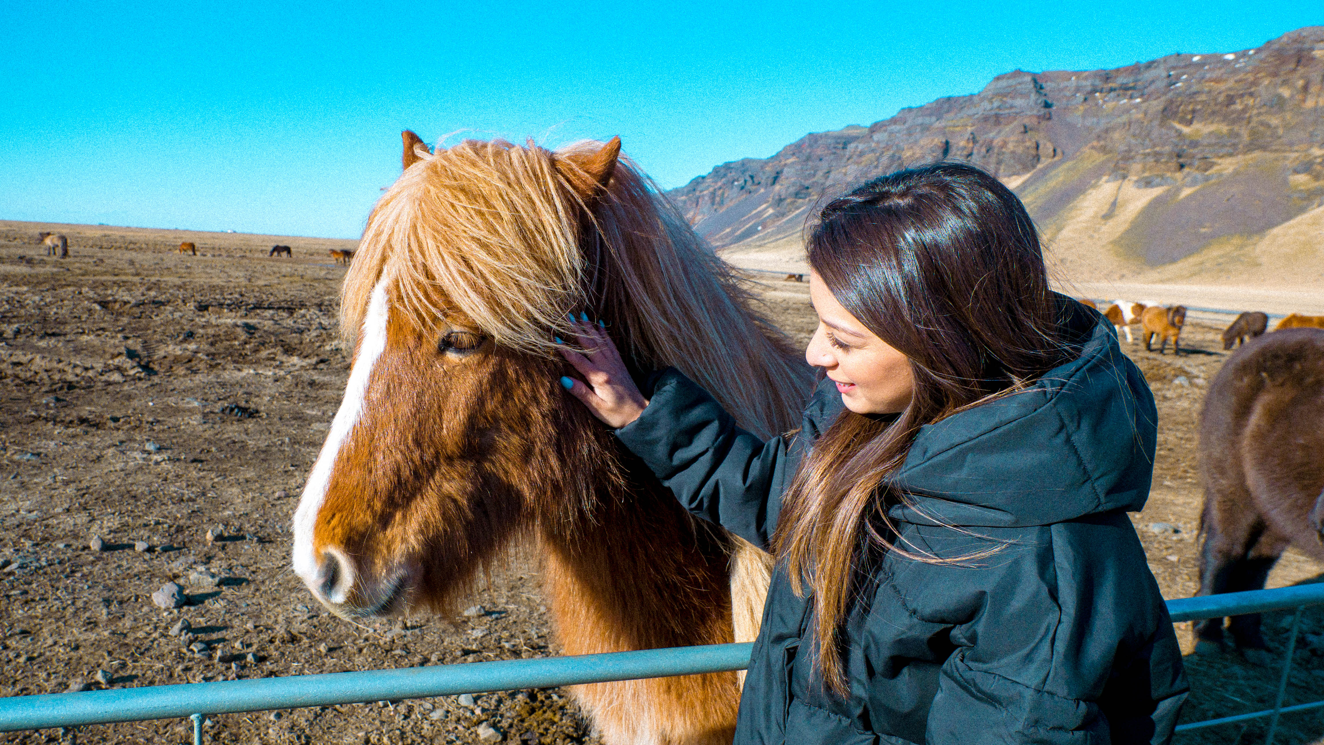 Andrea horse